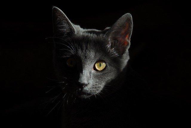 L'assurance pour chats : ce qu'elle couvre.